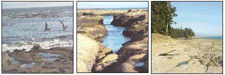 images of Botanical Beach