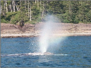 Whales at Port Renfrew