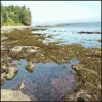 Botanical Beach, Port Renfrew, BC, Canada.